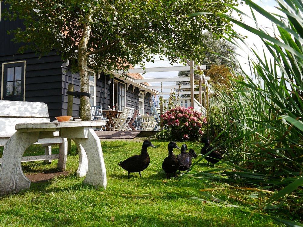 theetuin overleek waterland laag holland old holland high tea fluisterboot dagje uit lunch taart gebak huisgemaakt eendjes tuin terras veranda mooiste plekje van nederland.JPG
