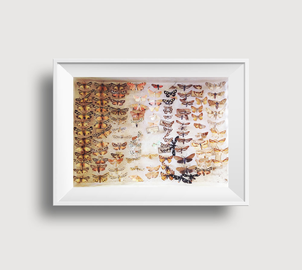 Moths and Butterflies in Thick White Frame RGB.jpg