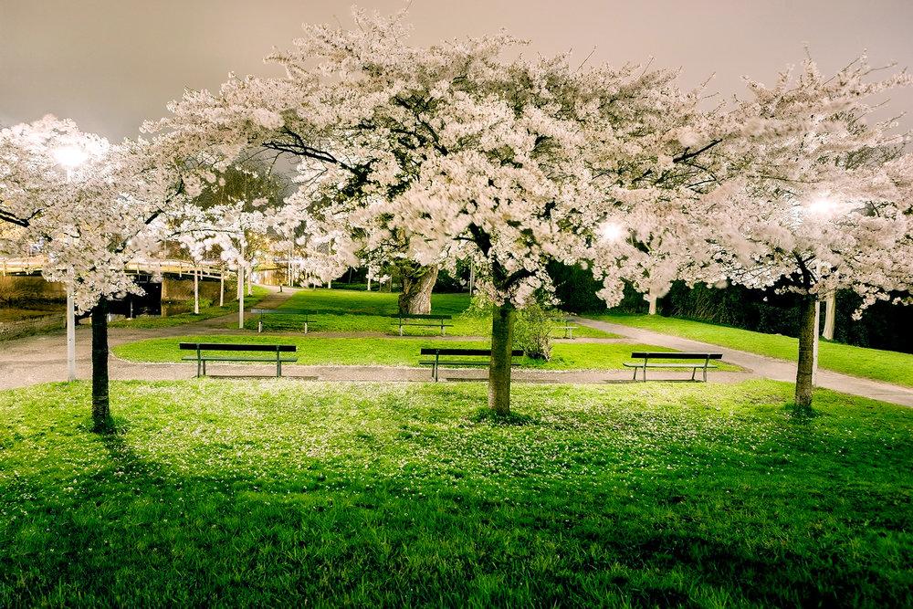Nacht-bloesem-westerpark-voorjaar-landschap-amsterdam-fotografie.jpg