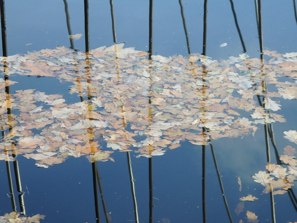 Leaves on the water garden