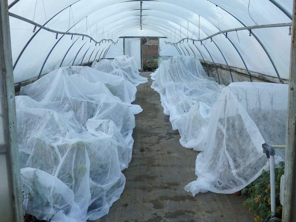 Poly tunnel under fleece