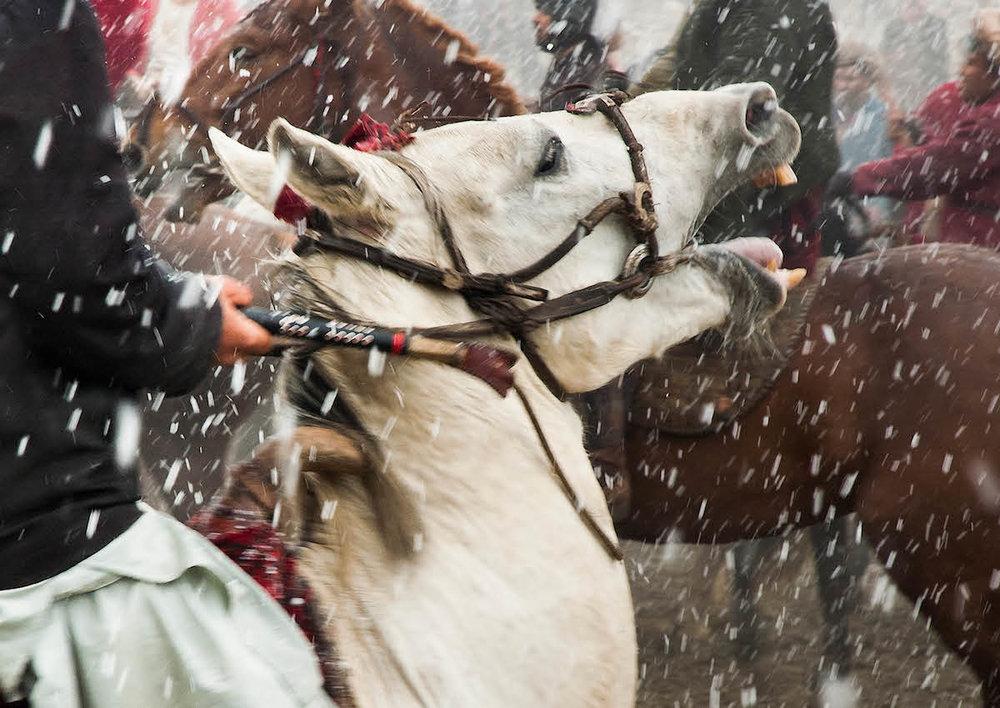 Buzkashi White Horse - 12,00 jpeg.jpg