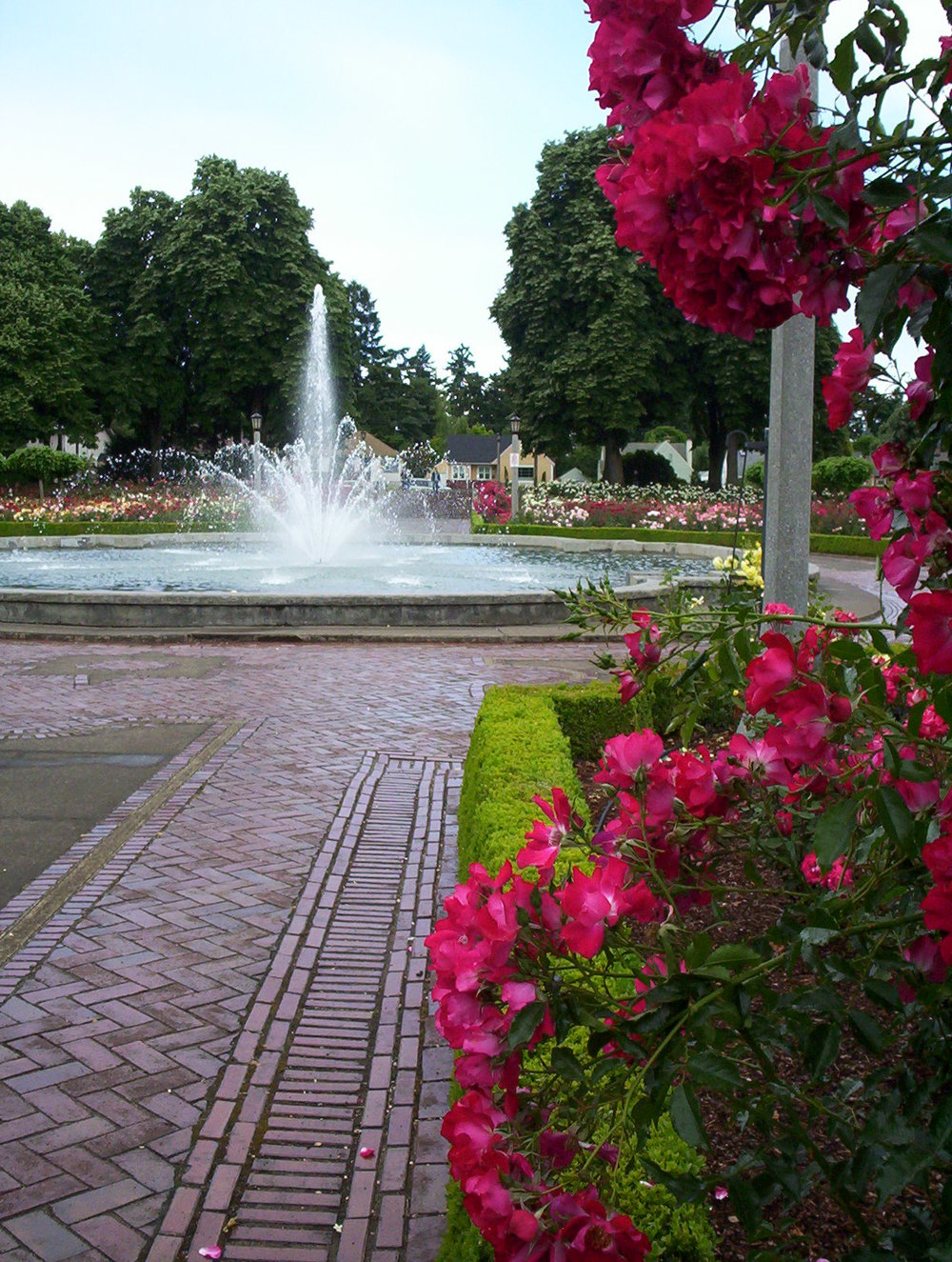 Projects   Peninsula Park Rose Garden