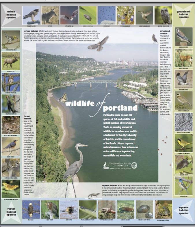 Wildlife of Portland Poster produced by Portland Bureau of Environmental Services to raise awareness of urban biodiversity.