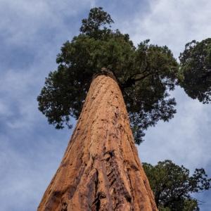 Mature Tree 1.jpg