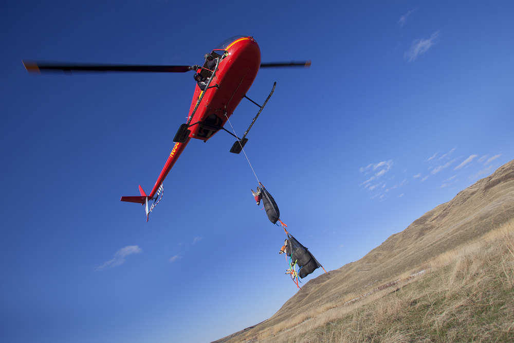 A helicopter piloted by Blake Malo, of Kiwi Air, hovers over the ground and slowly lowers two sedated mule deer to be inspected.