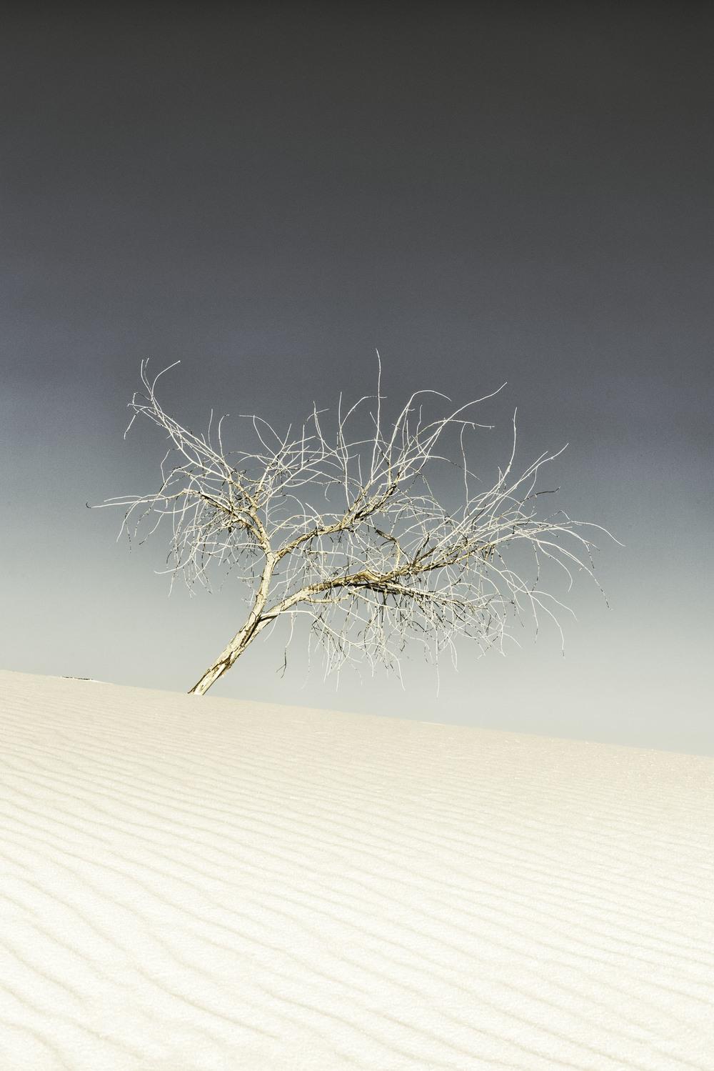 LoneRanger-Web.jpg