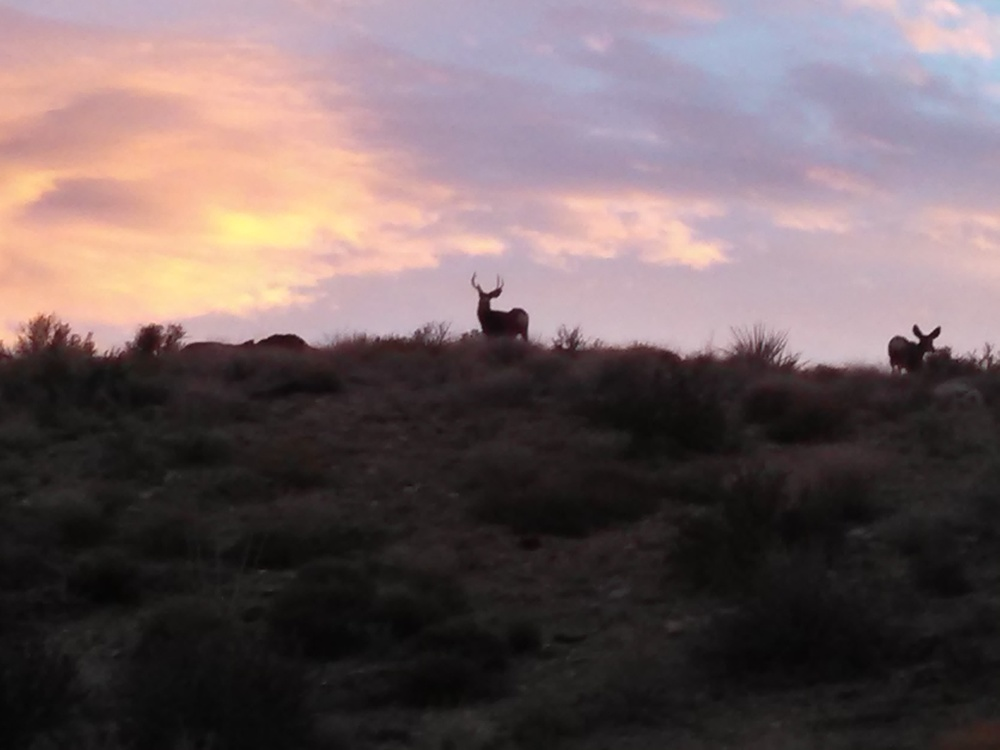 Buck and Doe Mule Deer Nevada Side Gold Basin.  Photo Larry Atkins