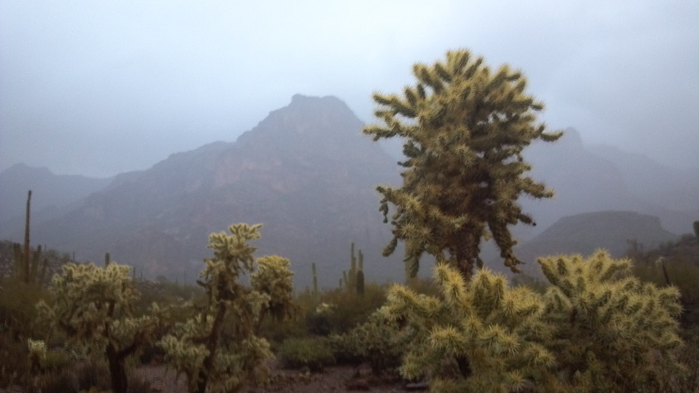 Cholla and Saguaro.   Photo Larry Atkins