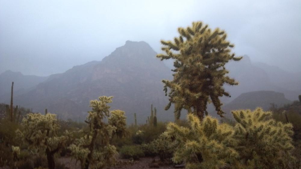 Cholla and Saguaro. Photo Larry Atkins