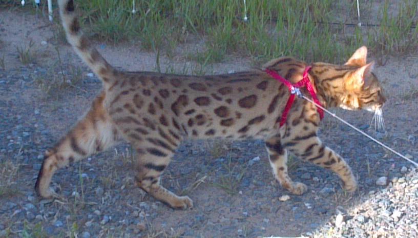 Moni's cat,   Photo Larry Atkins