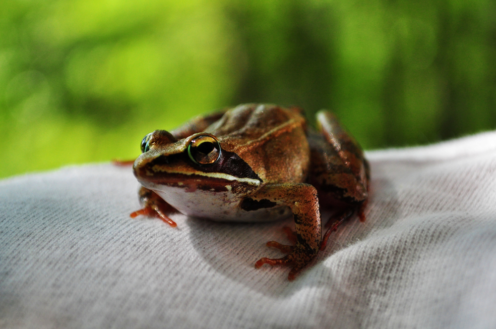 frogfriend3.jpg