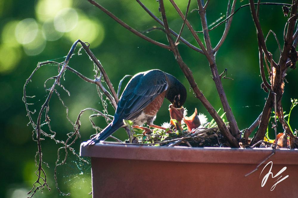 baby birds-1-2.jpg