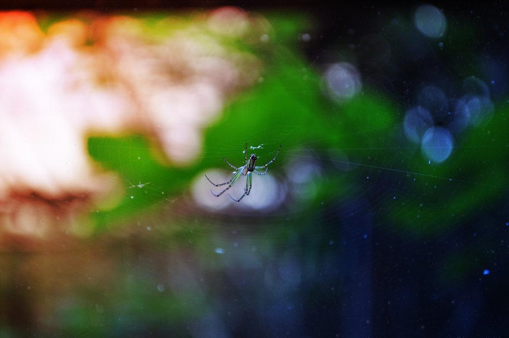spiderbro.jpg