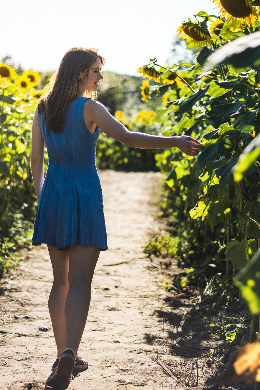 Sunflower-3.jpg