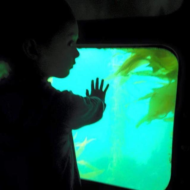 #littlehands #learning #kelpforest #semisub #newportbeach #funzone #allages #underwaterviewing