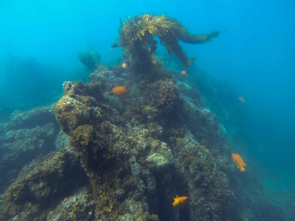 A Rock Reef in Southern California