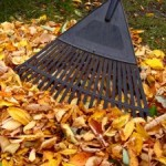 Raking-leaves-300x225