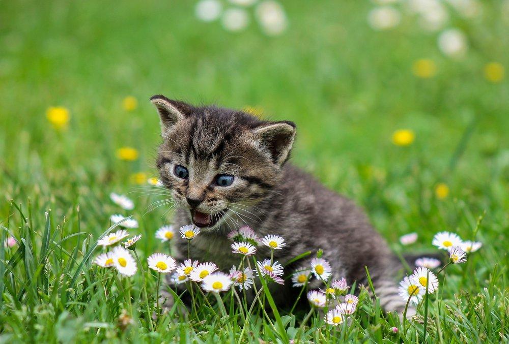 kitty-2948404_1920.jpg