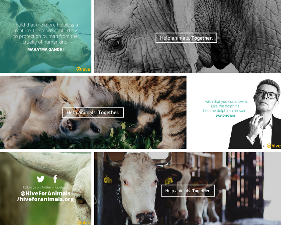 america for animals hive marketing portfolio