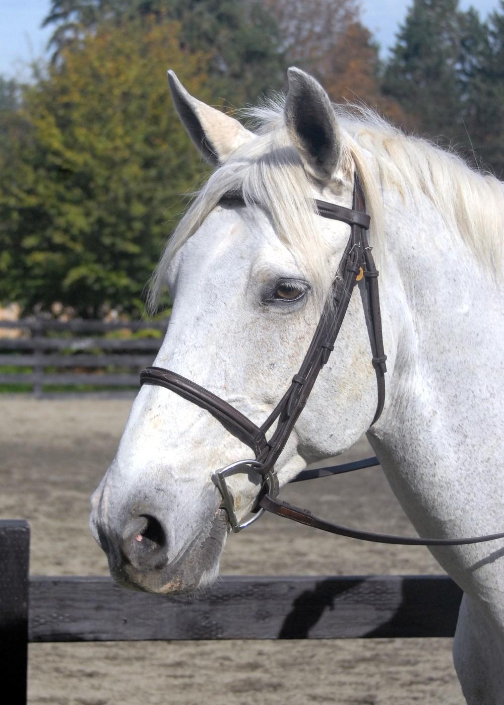 finnigan, quarter horse gelding
