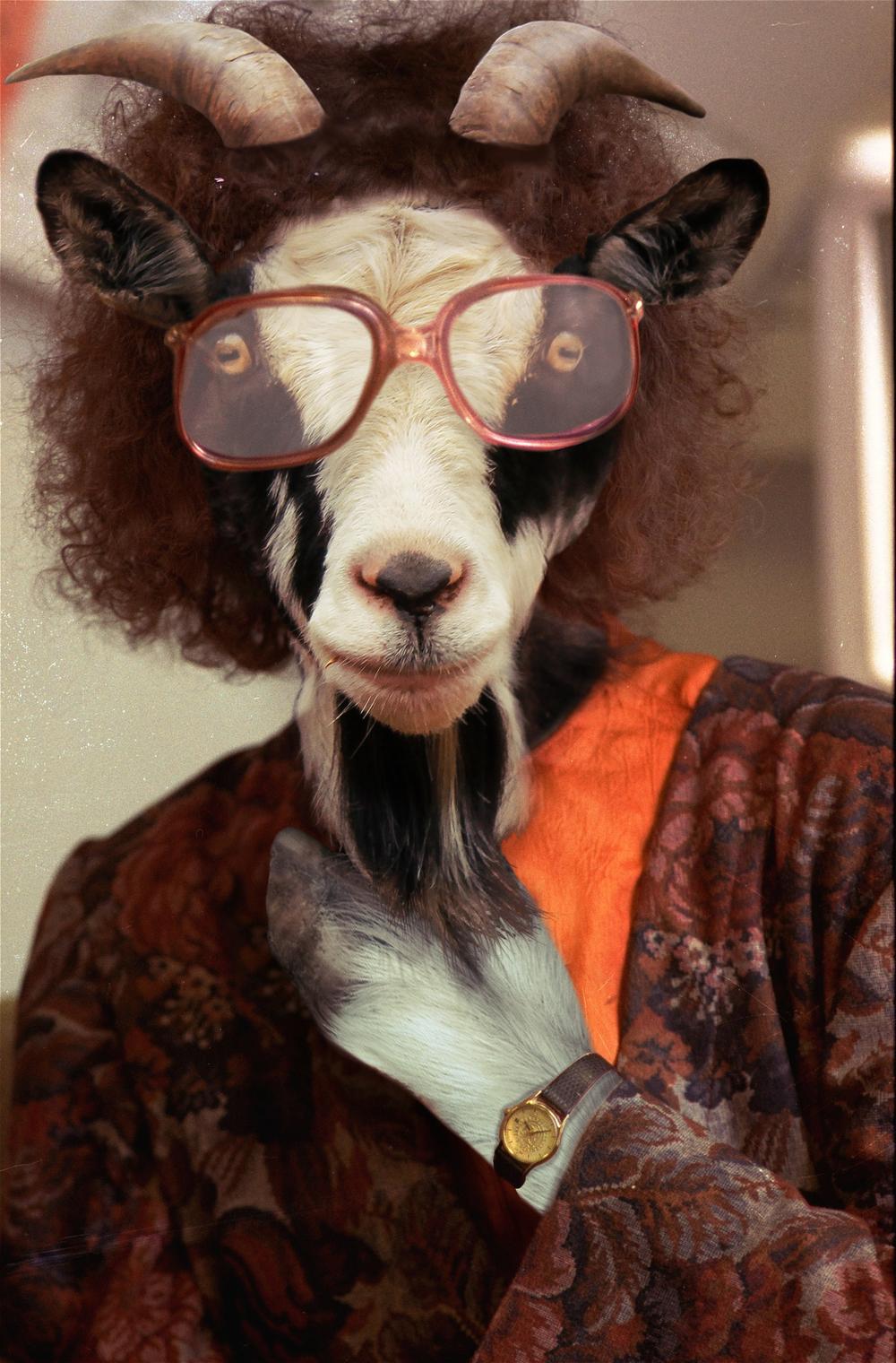 Joyce Carol Goats, 2016