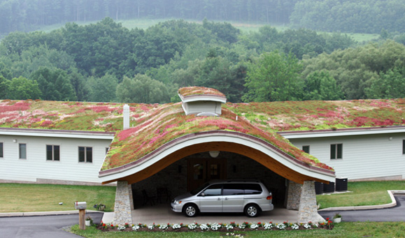 A whole new meaning to green building!