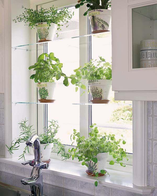 Herbs on kitchen window shelves.