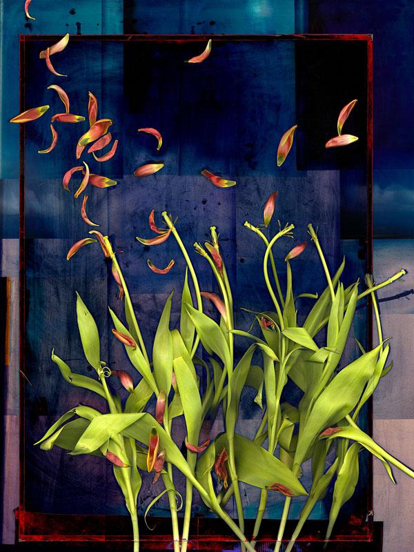 Richard Krasin Tulips 36x48-digital print.jpg