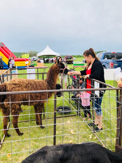 Staff enjoying the family events such as the petting zoo.