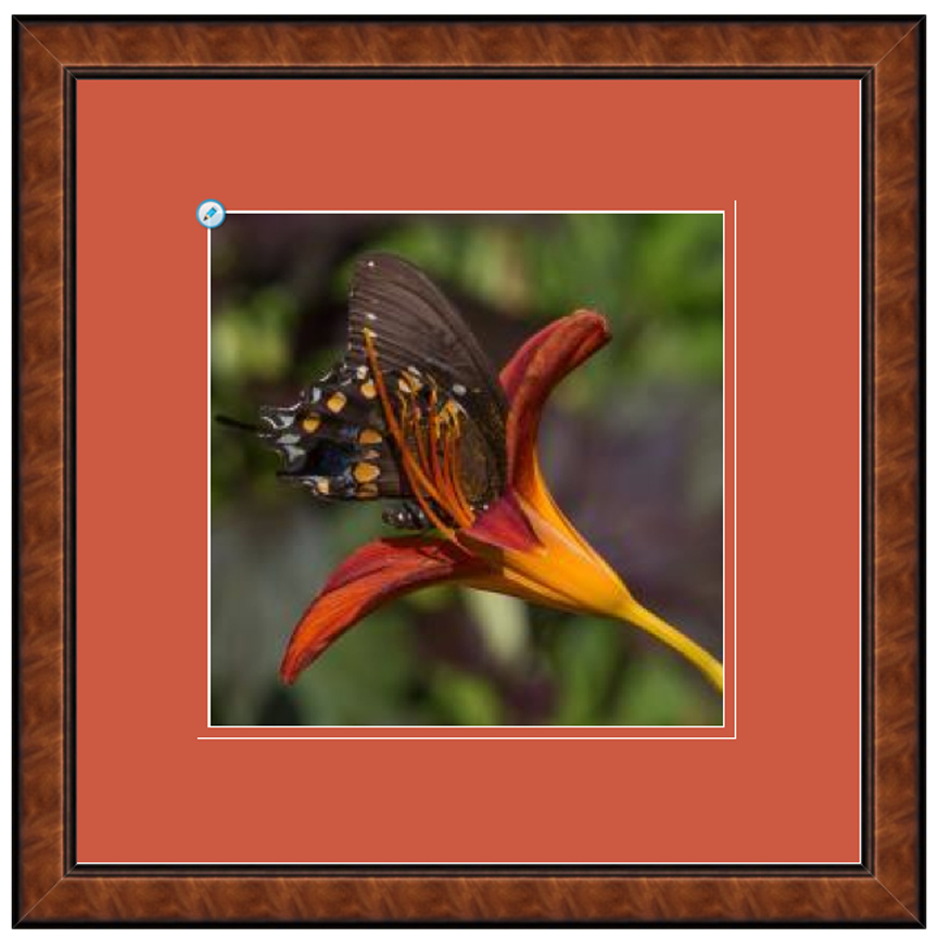 framedredbfly.jpg