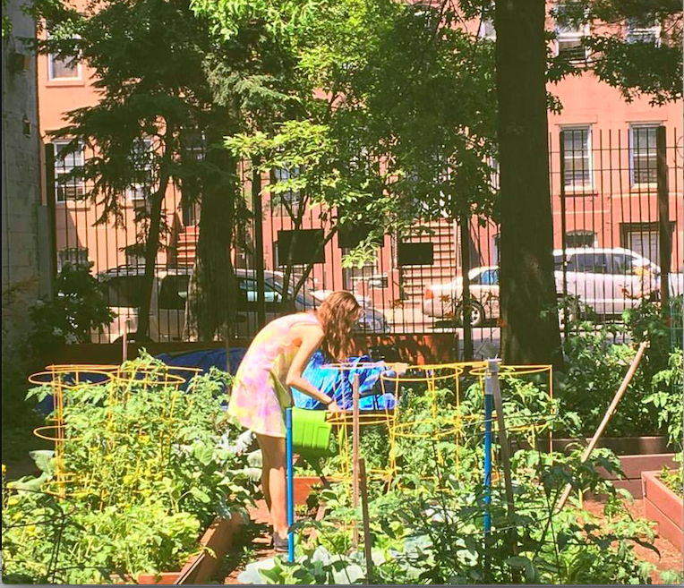 Whole Neighborhood Community Garden, BedStuy