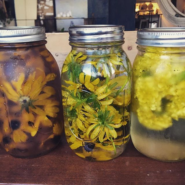 Extraction progress -- Black eyed susans -- some wild in Vermont + some from our garden plot, and some marigolds from our plot 🙏🏽🌞