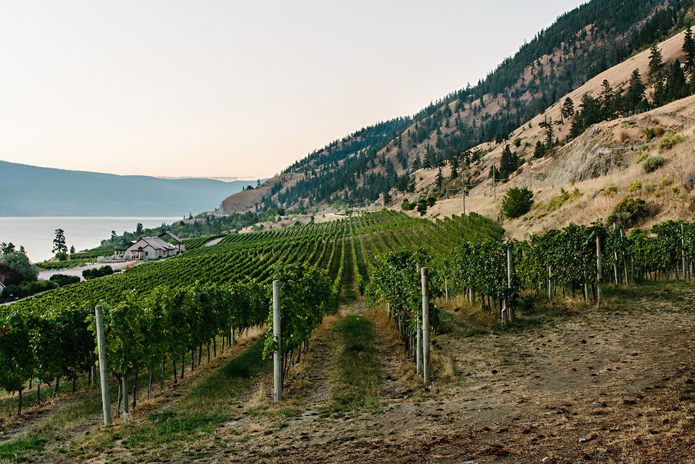 - There is no other winery in the Okanagan with these specific set of conditions:Mt. Eneas: provides direct light and shade at opportune times Four separate soil types: influences the flavour in the finished wines Steady wind: keeps vines dry and healthy The Lake: moderates vineyard temperatures Vine age: their oldest vines are now entering their third decade, producing quality and mature fruit.