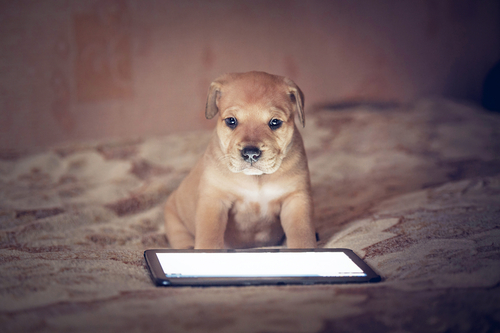 Puppy on Mobile