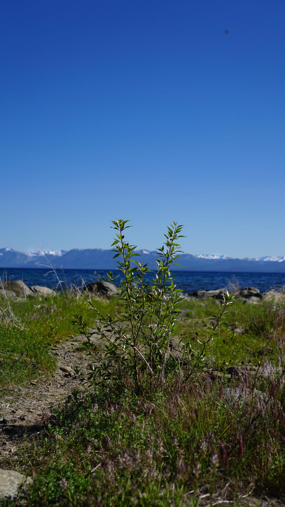 lake tahoe - trek your market