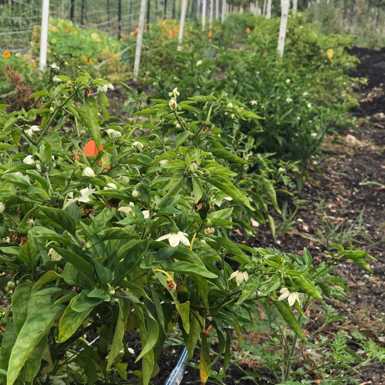 Gardens GreenMarket-Palm Beach Gardens — Lox Farms