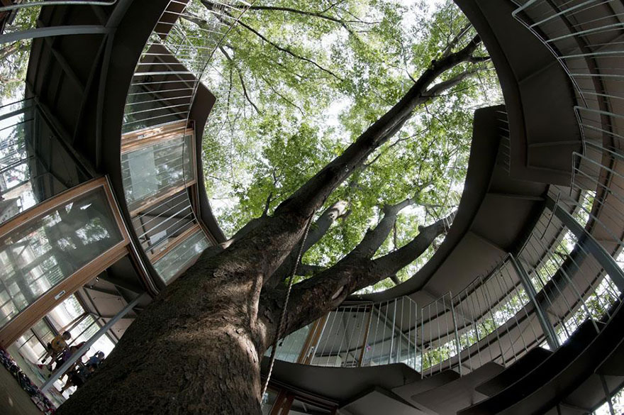 kindergarten-around-tree-zelkova-fuji-tezuka-architects-33.jpg