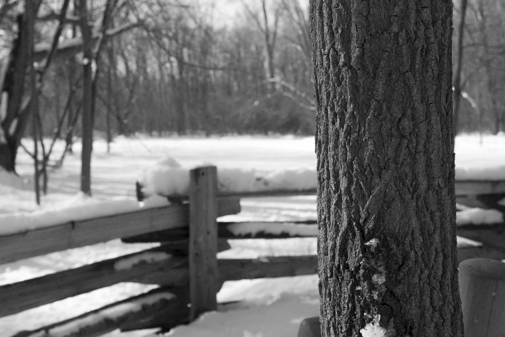 Fence and Tree Winter Scene.jpg
