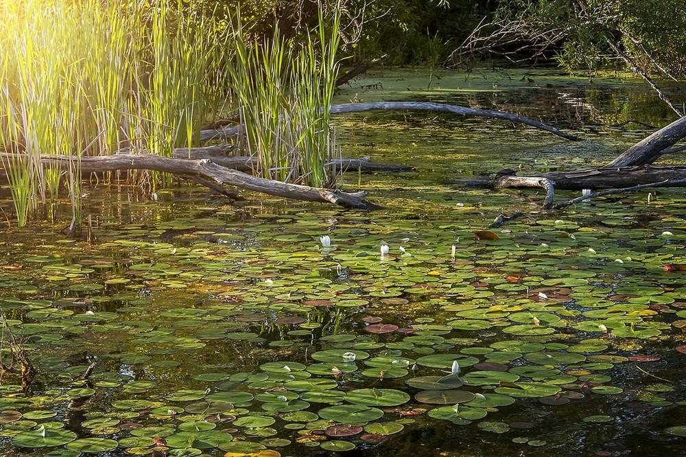 Florence Lake.jpg