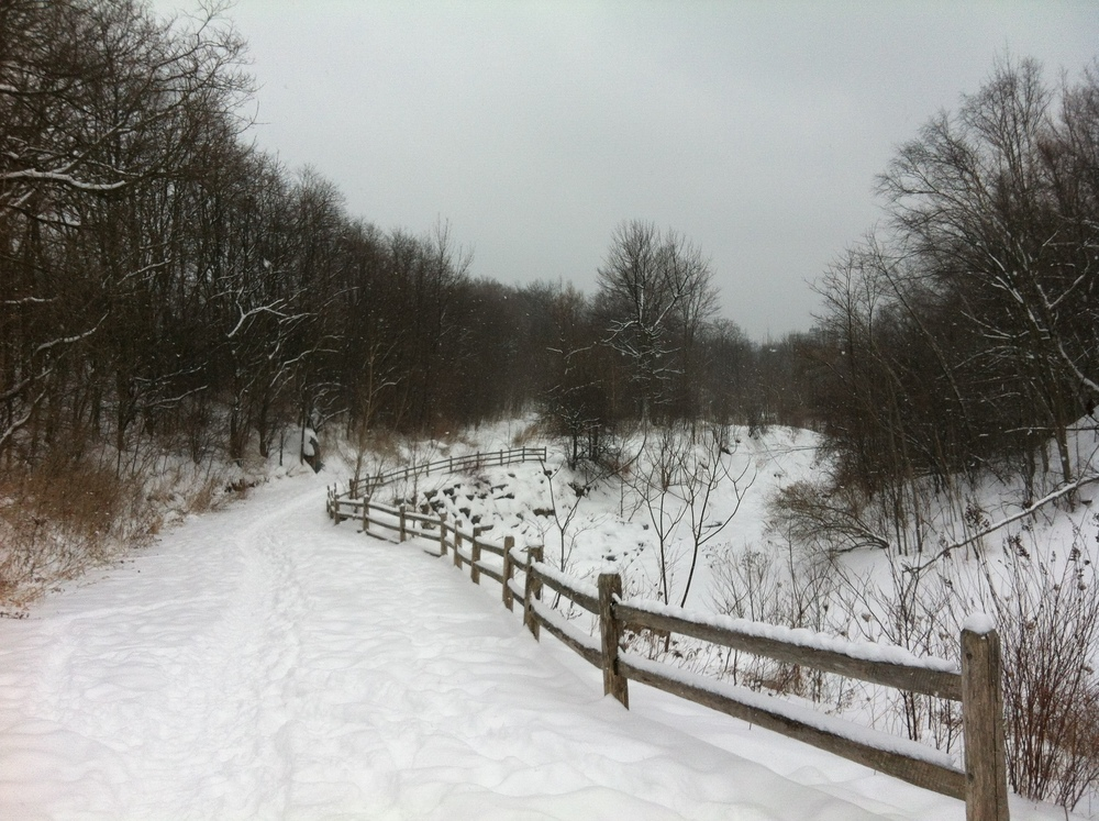 warden woods snow.JPG