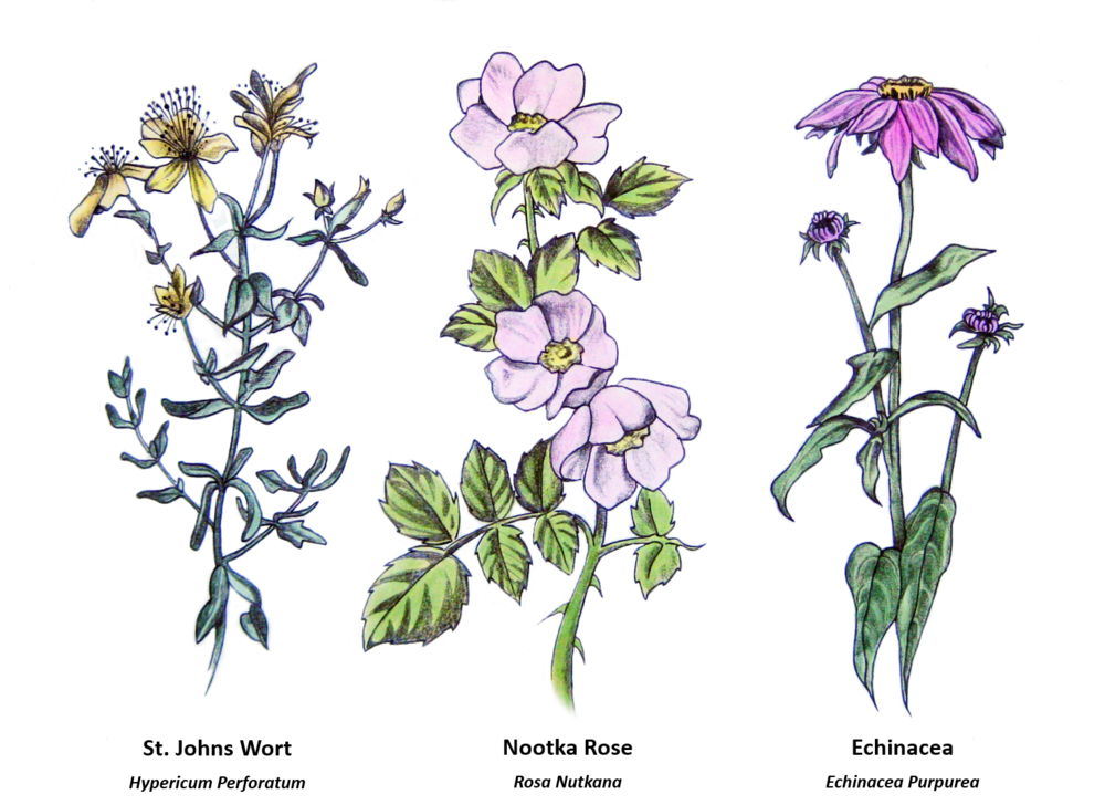 Floral with names - GWT Home.png