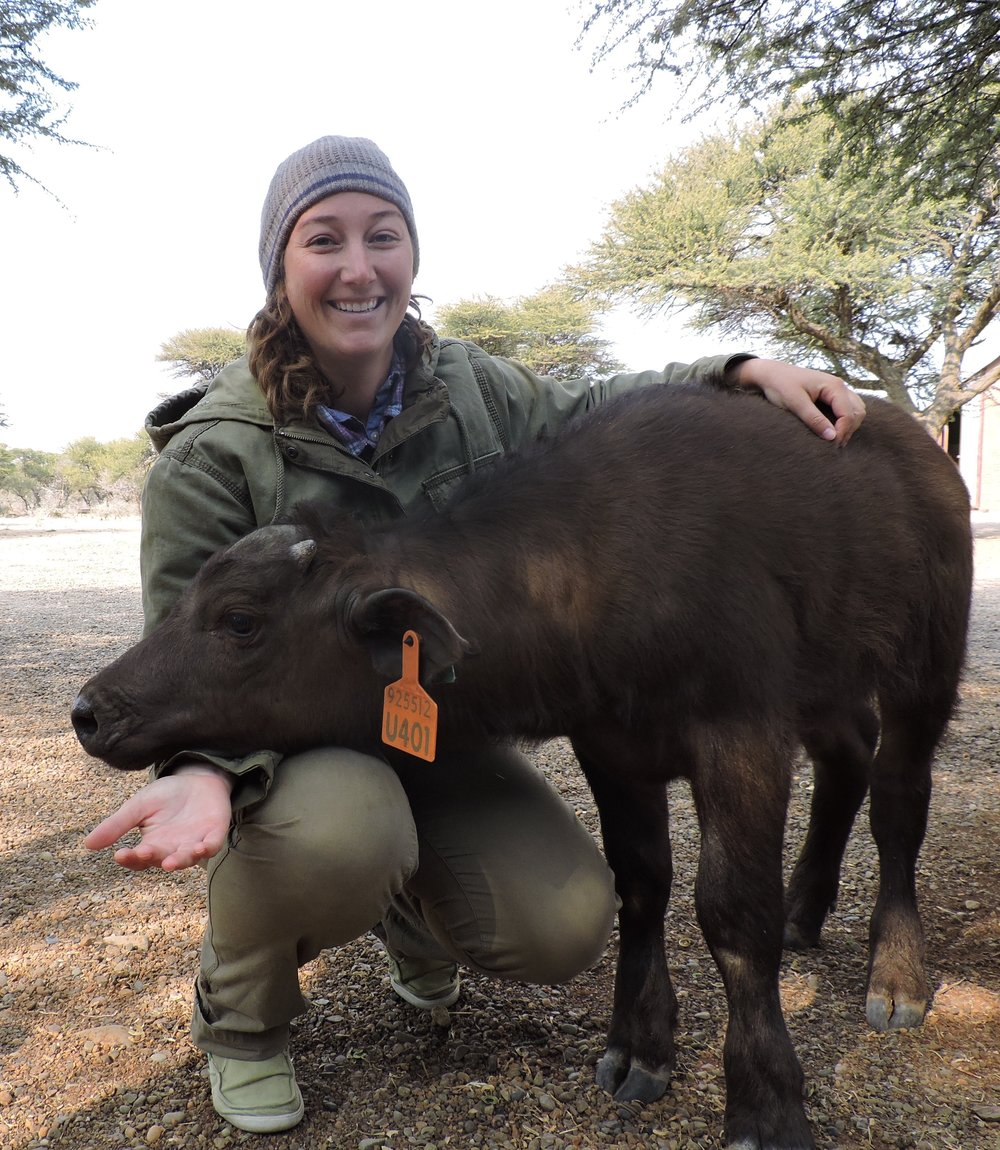 Erin with Cape Buffalo in South Africa.