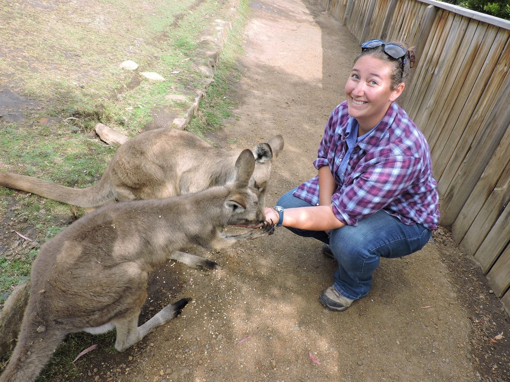 Erin feeding Eastern Grey Kangaroos in Tasmania.