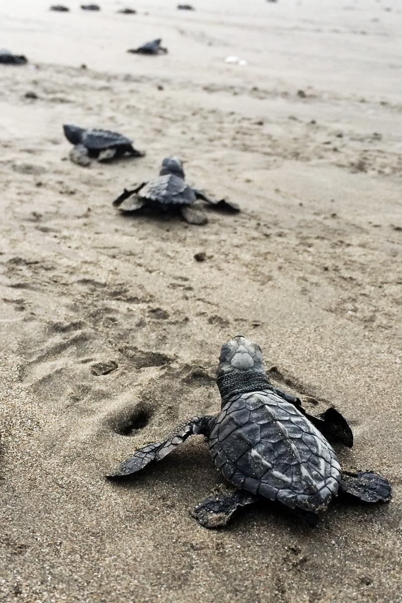 Turtle Trax, Costa Rica