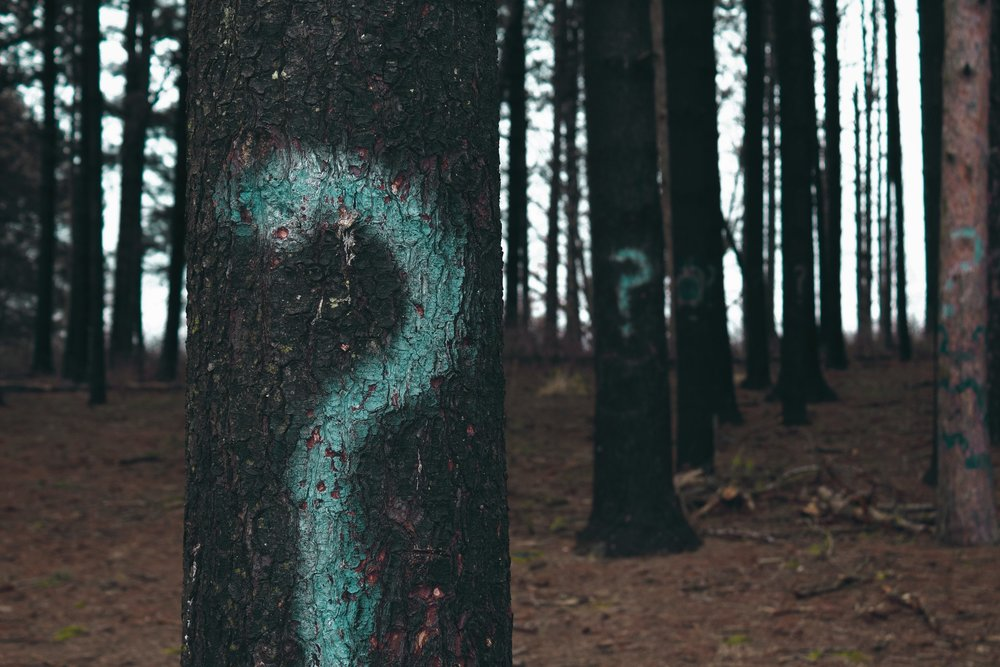 Just like this photo featuring a dark forest with question marks spray painted on the tree trunks, you may feel lost among all your questions about feature functionality. A good consultant can help guide you through the forest of questions you'll face while trying to figure out the functionality you need and what you can afford within your budget.  Photo courtesy of  Evan Dennis  on  Unsplash