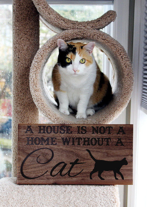 CAT1-edited.jpg