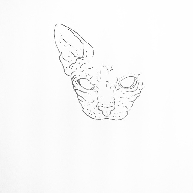 It's like drawing a naked old man. #👴🙀 #sphynx