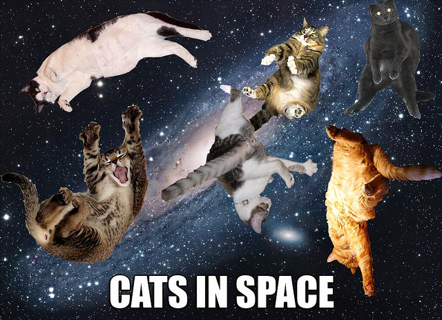 Cats in Space!  by  WF&DT  on Flickr.  more space cats!