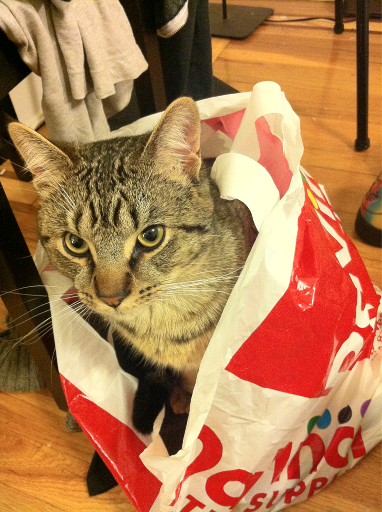 """This is MY bag…""   -Cat"